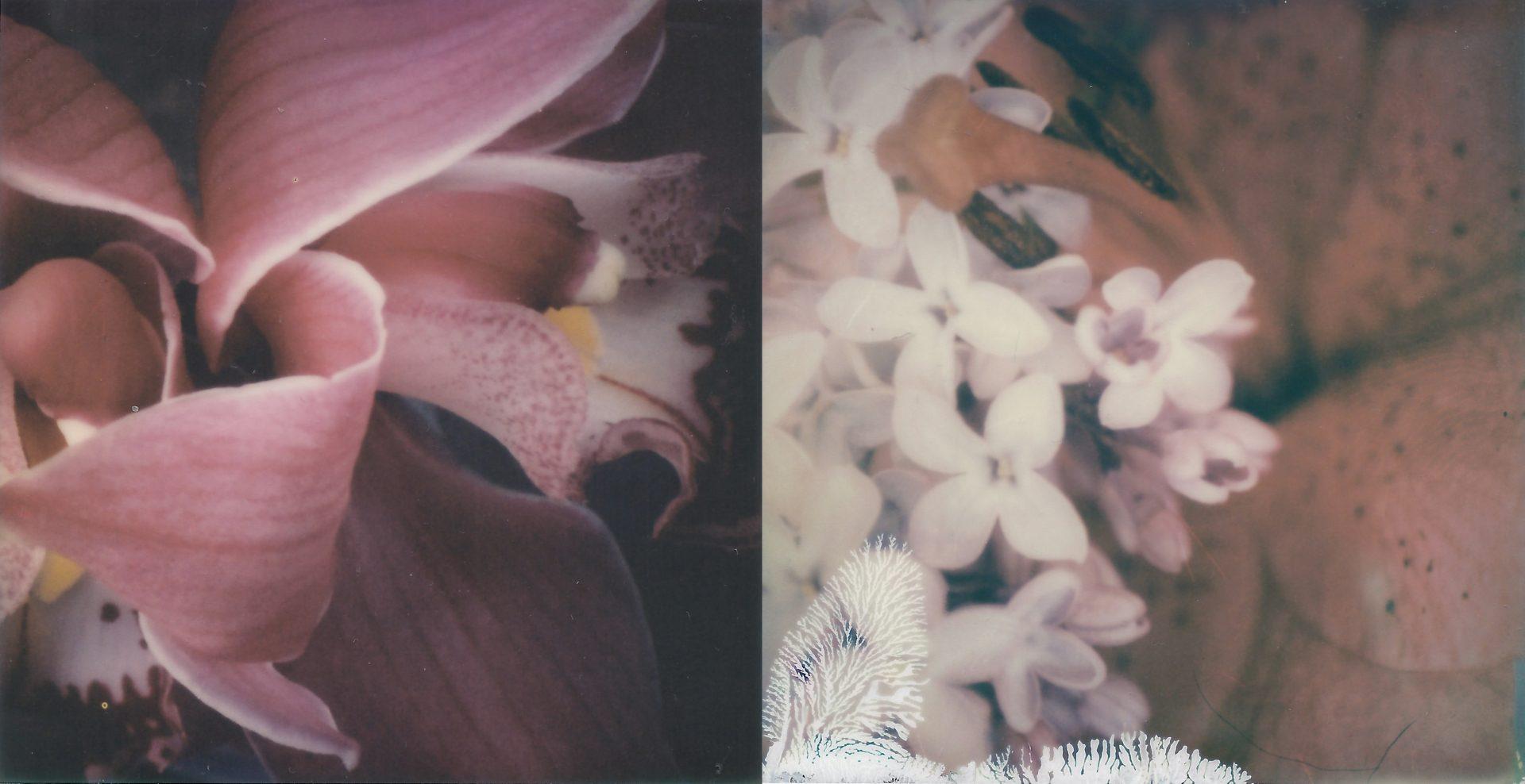 3.Orchidaceae, Syringa Vulgaris, Lilium Martagone